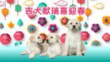 Celebrating the Year of the Dog (Mandarin)
